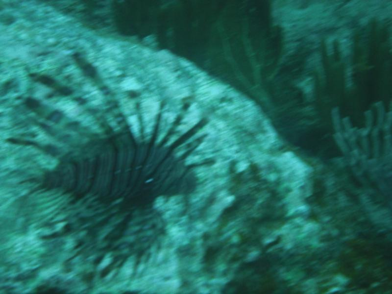 Bring your spear gun and impale a lion fish.The bane of the Caribbean reef fish and good eating too.