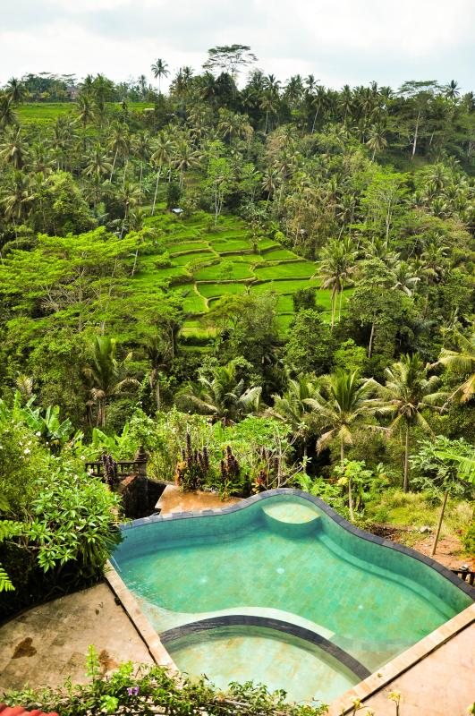 Swimming Pool and rice terrace