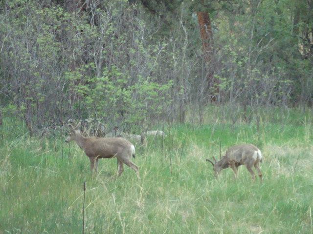 Claro en el frente de la casa ofrece un montón de observación de la fauna