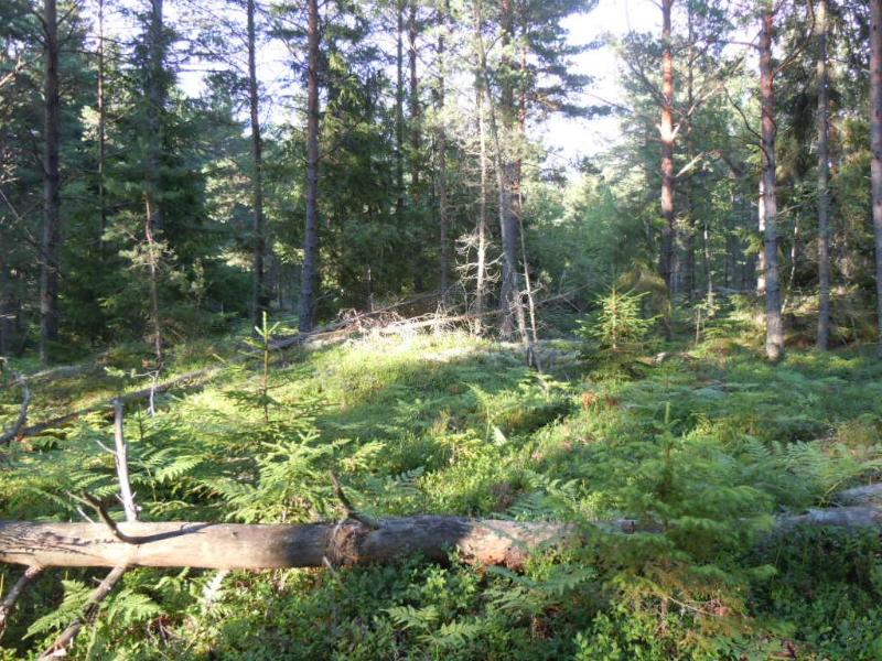 A forest for long and relaxing walks