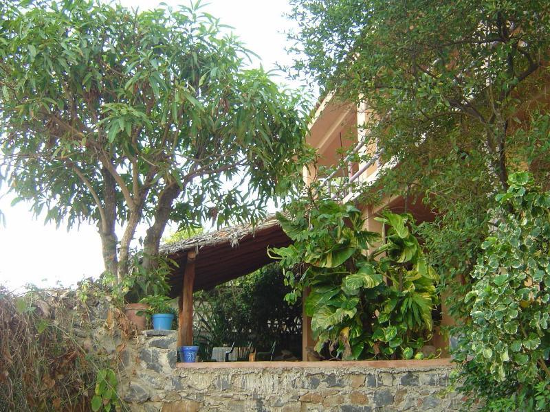 Árvore de manga e terraço!