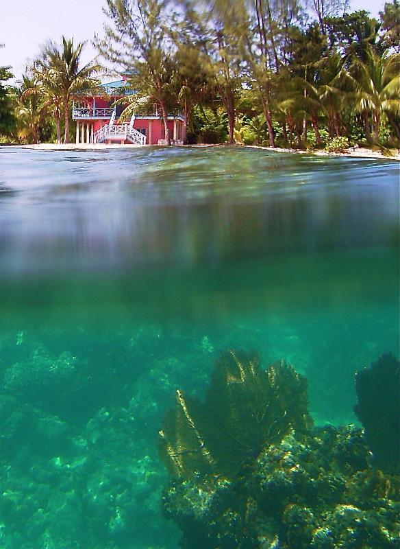 a casa de coral e recifes de corais