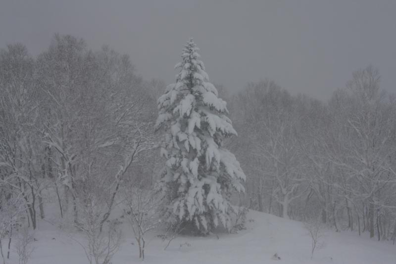 Whiteout day...from dining room window - Hirafu boasts some of the highes snowfalls in the world