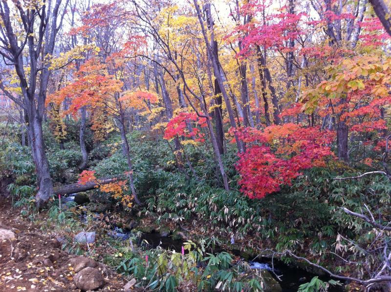 Autumn Time is perfect on Hokkaido
