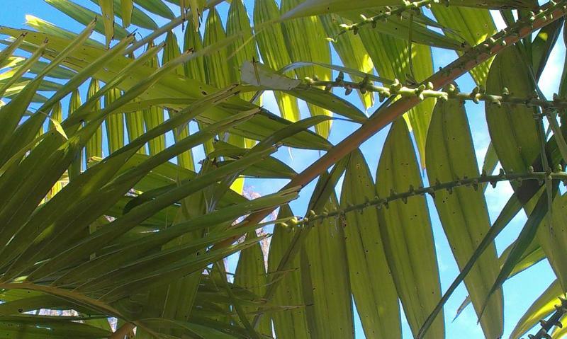 cielo azul a través de hojas de Palma