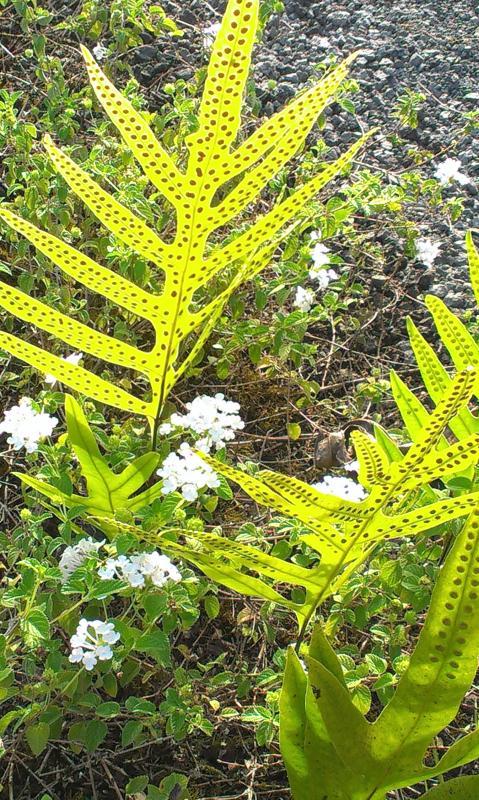 favoritos helechos y flores blancas pequeñas