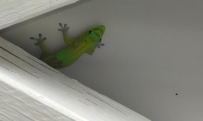 Salida penis Gecko a usted en la ducha al aire libre