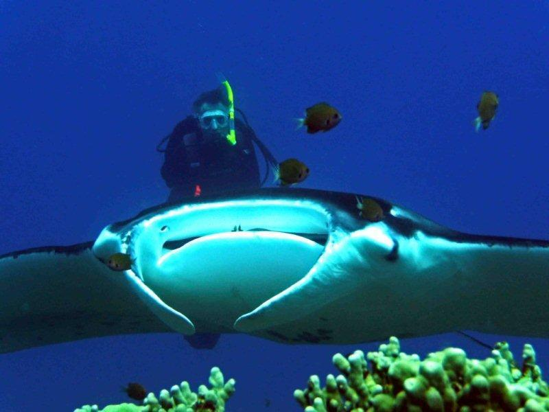 Me diving just south with the manta rays