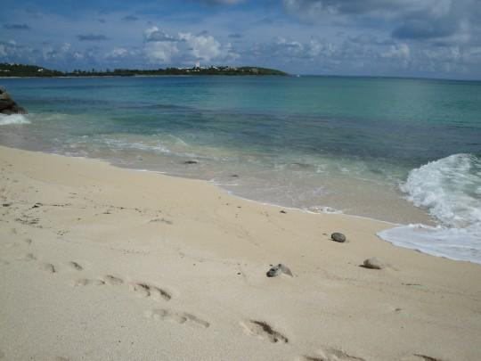 The turquoise Caribbean beach at the NBBC ... One of my favorites on the island