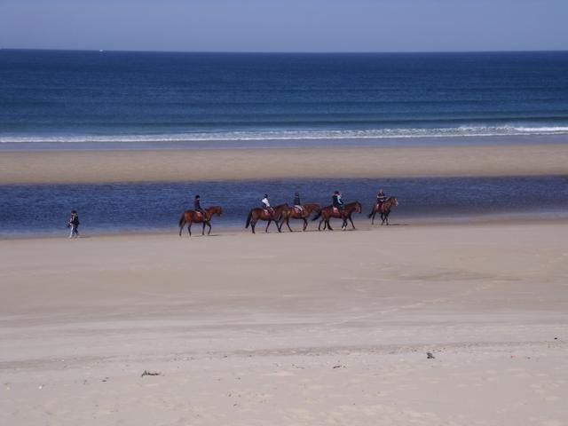 Chevaux sur le français des Landes plage emplacement-landes-mimizan-plage