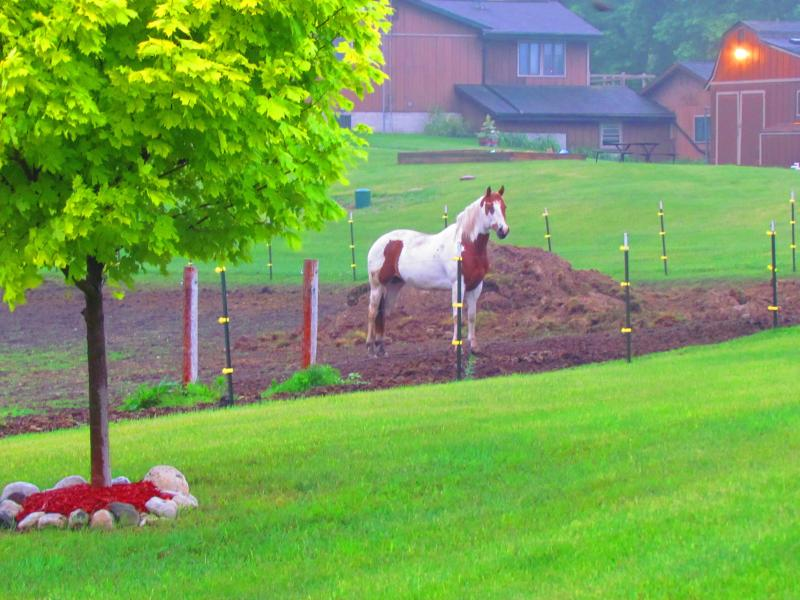 View from end of our driveway. Neighbors have three horses