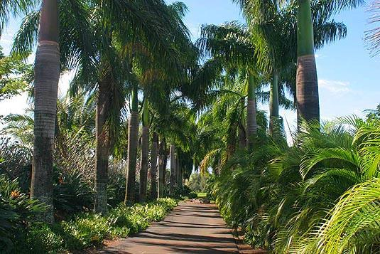 Driveway is lined with Royal palms
