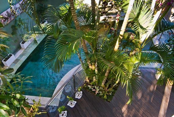 Tropical natural filtered swimming pool with contemporary glass and stainless steel pool fence