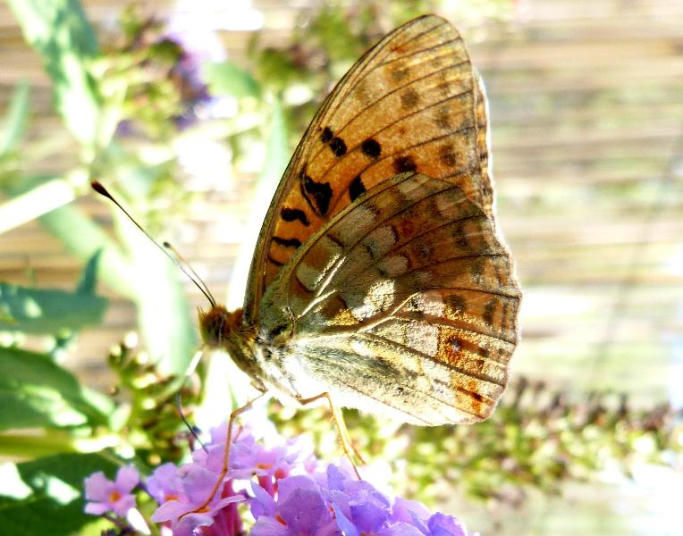 We love nature and our butterflies