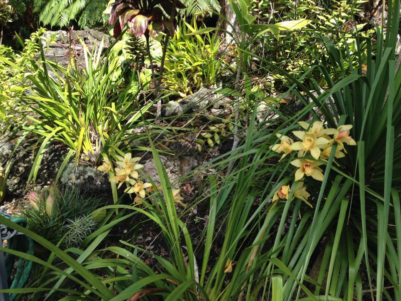orchids love this climate