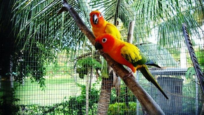 Sun conures are colorful birds, take your pictures.