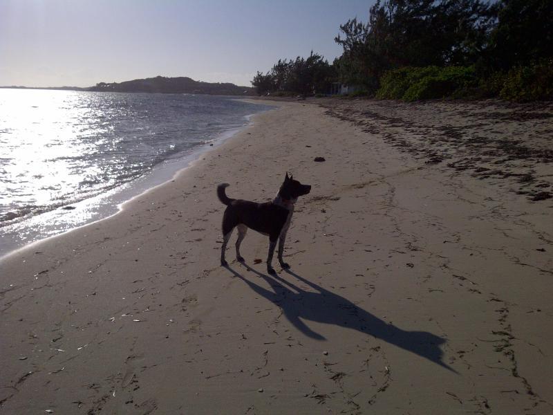 Thompsons Cove Beach (y nuestro pocake Saphire)