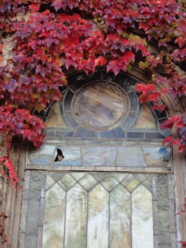 Stain Glass in the fall