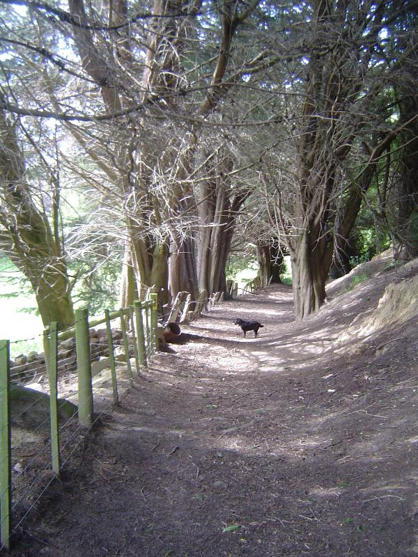 Valley walk to Harbour Cone.