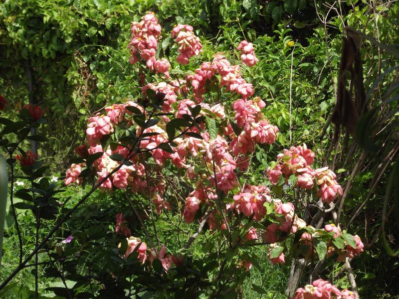 Lush and beautiful flowers and fruit trees in the yard that you have access to.