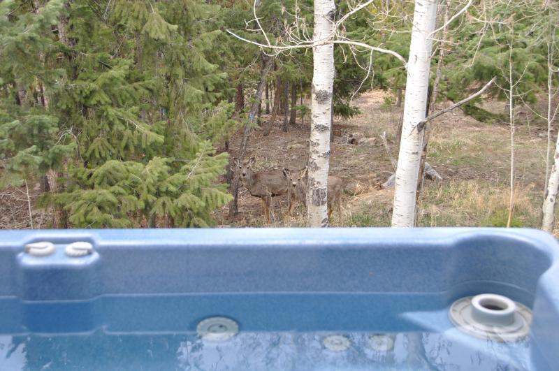 .Un par de ciervos, paseando más allá de la bañera de hidromasaje.