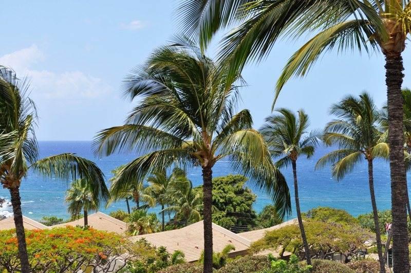 Palm Tree,Tree,Tropical,Beach,Coast