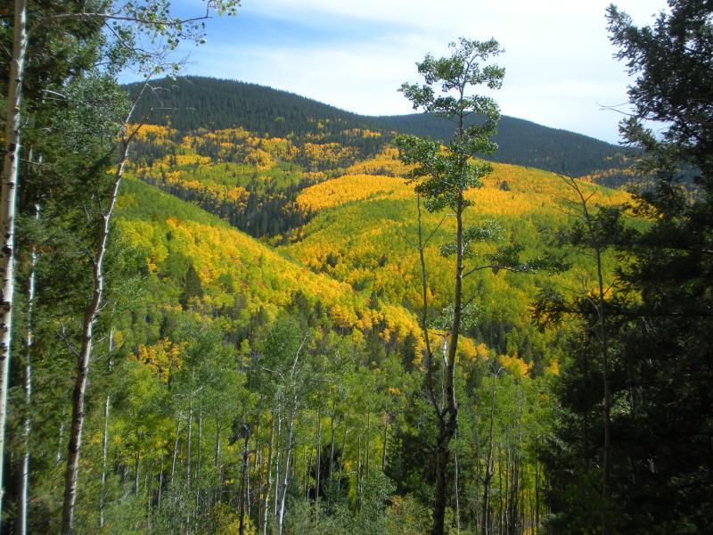 Aspen Grove i oktober, 7 miles upp vägen
