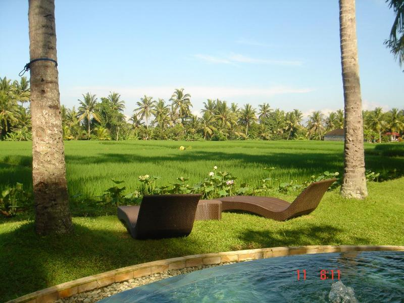 pool with ricefields view