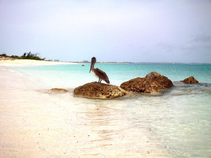 Somewhere on the beach in Providenciales...