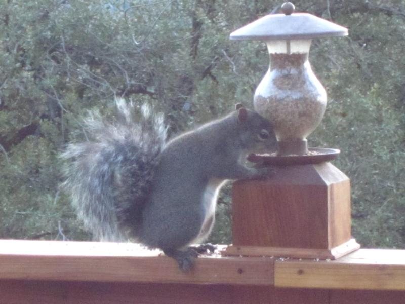Squirrels Abound and Think They Are the Birds