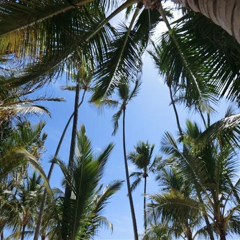 Beautiful palm trees on the beach