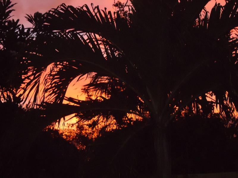 Vue coucher de soleil dans le jardin tropical