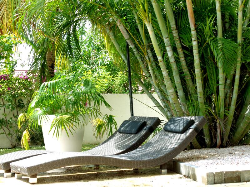 Sun loungers under the palm tree