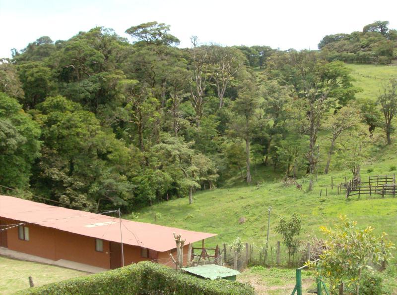 View of Backyard