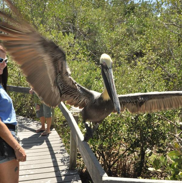 Get up close & personal with our feathered friends at the Wild Bird Center.