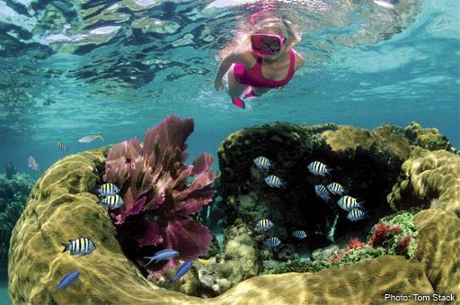 Dive, snorkel, boat, jet ski, or fish, you'll never forget the clear waters of the Conch Republic.