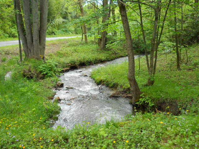 Trout stream on property