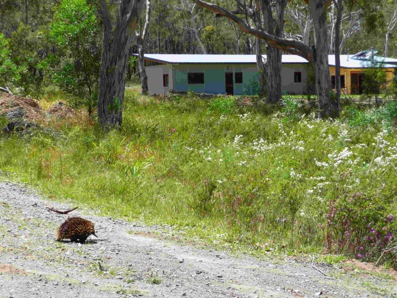 Echidna on property