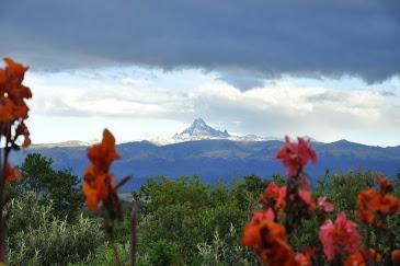 Mt Kenya with blooms