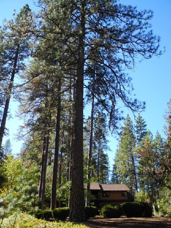 Set among the big pines