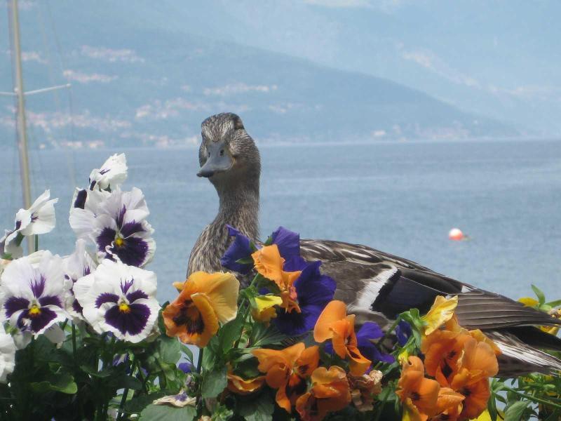 Divina Vita Bed & Breakfast Varenna, alquiler de vacaciones en Varenna