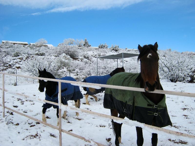 Il a fait de neige et j'ai adoré les chevaux !