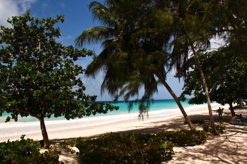 Many trees dot the Miami coastline with its powdery beaches.