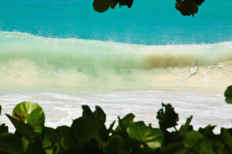 Almond trees among the powerful surf .