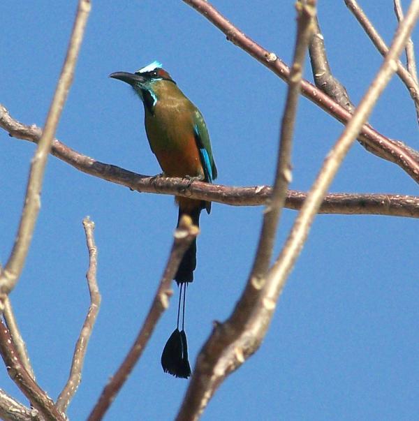 observación de aves grande