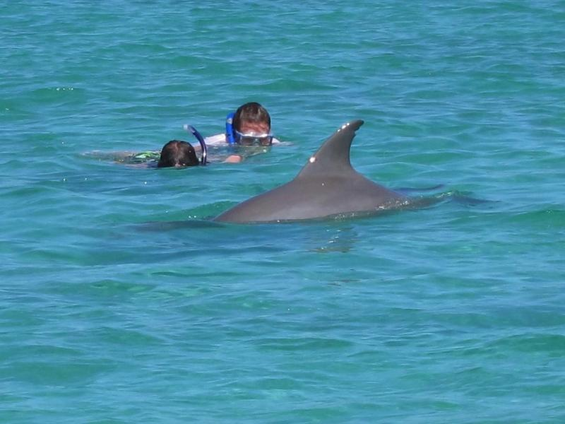 Swimming with wild dolphins at great exuma