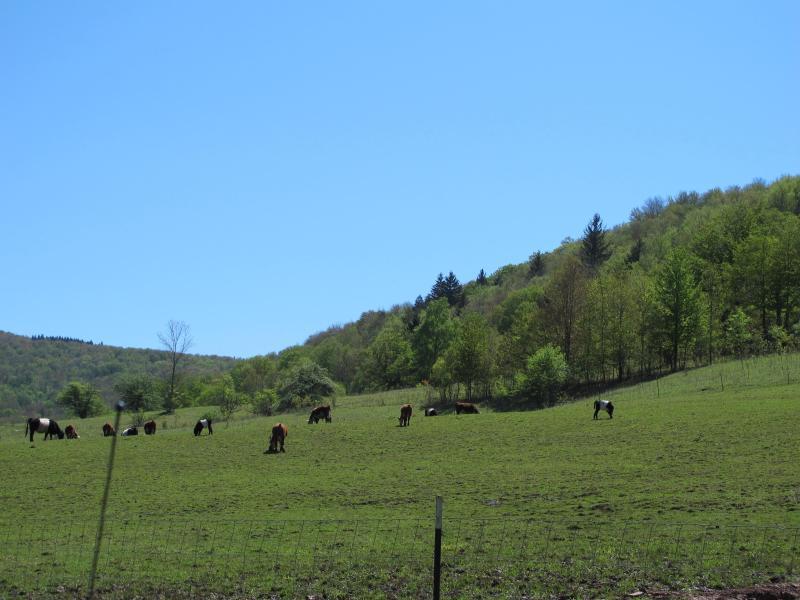 Picturesque Farm Lands