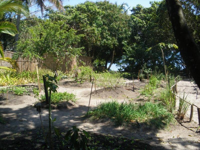 Herb garden at Villa N'Banga