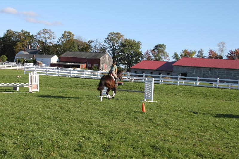 Cantering in the fields