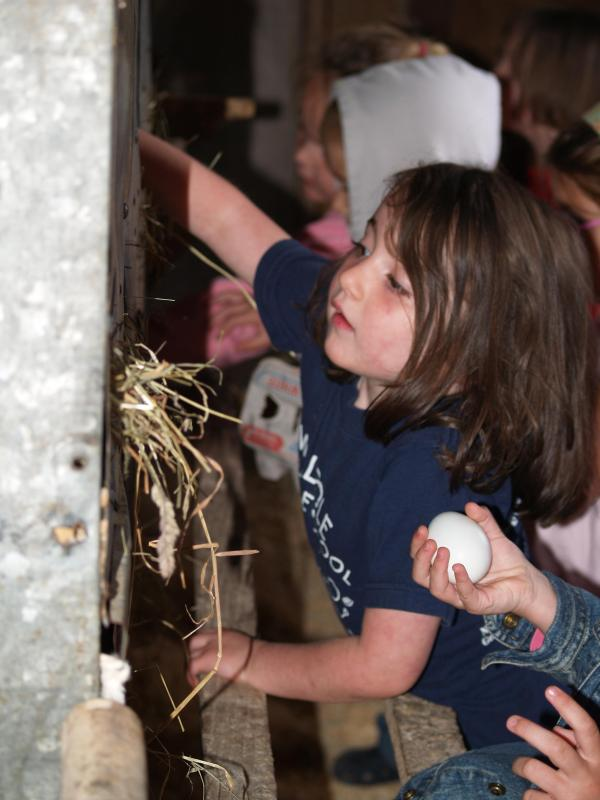 Einer unserer Gäste Lieblingsbeschäftigungen hier auf unserem Bauernhof - sammeln noch warm Farm frische Eier!